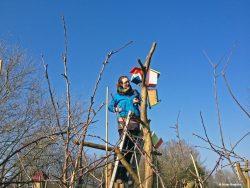 Nestkasten ophangen voor NLdoet bij De Kruidhof