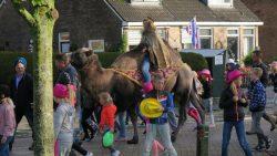 Jubilerende juf gaat in optocht voor op kameel