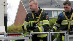 Brandweer druk voor redden van kat