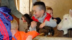 Peuters Wrottershonk gingen lammetjes en geitjes aaien
