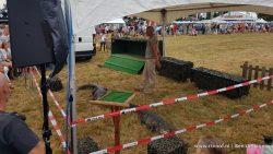 Vermiste krokodil Boerendag Wâlterswâld: pr-stunt