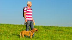 Loslopende honden graven gaten in Friese dijken