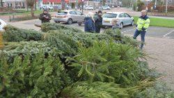 Inwoners Noardeast-Fryslan zamelen kerstbomen in