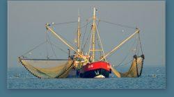 Overheidshandhaving garnalenvisserij Waddenzee niet op orde
