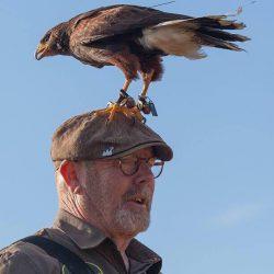 Roofvogelshow op Paasmaandag bij de Spitkeet