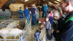 Open dag schapenmelkerij Rispens