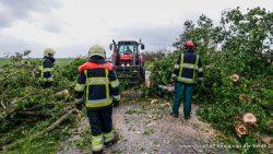 Omgewaaide boom zorgt voor stremming in Wyns
