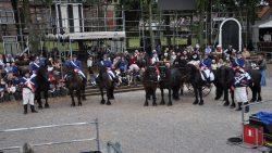 Friese paarden van de partij in Salomon - Het Kollumer Oproer.