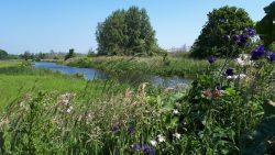 Weekend vol buitenactiviteiten: Weide Sompe Wâldwykein