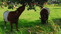 Project 'De boomwal als apotheek voor vee en bron van biodiversiteit'  door vereniging VANLA Achtkarspelen